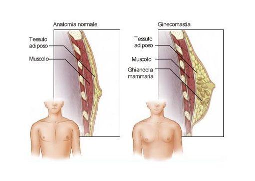 seno-maschile